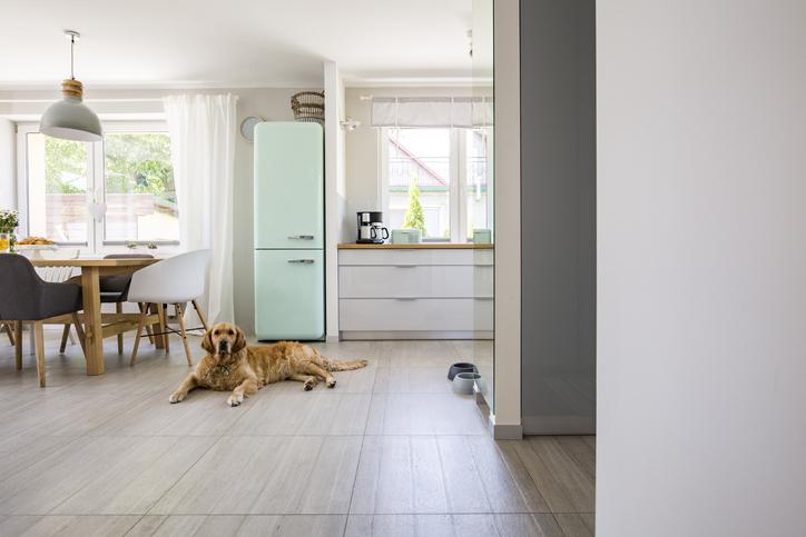Espacio abierto perro