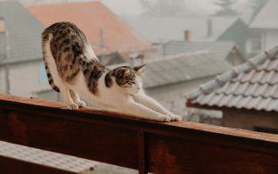 Gato balcon estirandose