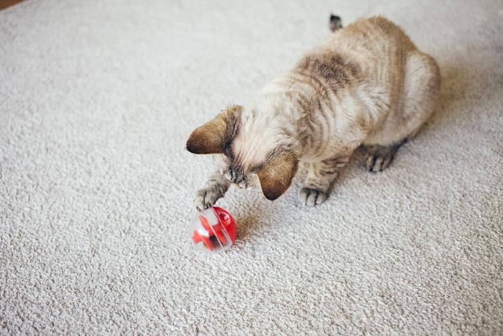 Gato juguete rojo