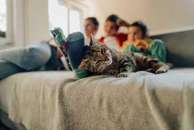 Seguro de gatos mascotas | ViveMásVidas